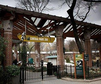 Zoo central park Guia Nueva York en 3 dias