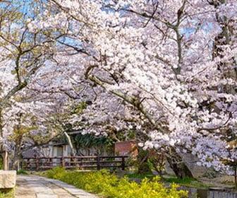 guia de viaje de kyoto